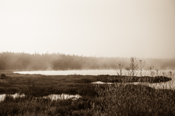 Fog at Seawall